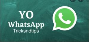 What Is YOWhatsApp?